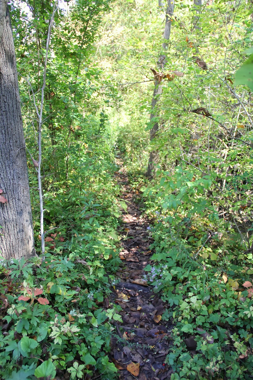 What an Early Woodland Path Might Have Looked Like