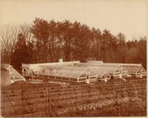 Greenhouses at Ventfort Hall (Morgan Manor Today)